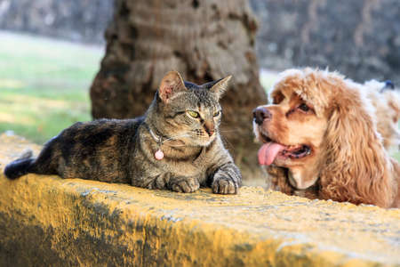 stray: Typical image of a relaxing cat with a stupid dog in the background Stock Photo