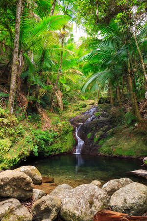 adventurous: Beautiful small cascade in the Puerto Rican Jungle found during an adventurous hike in the rainforest