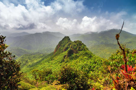 Beautiful panoramic view over the hills in the jungle of the El Yunque national forest in Puerto Rico