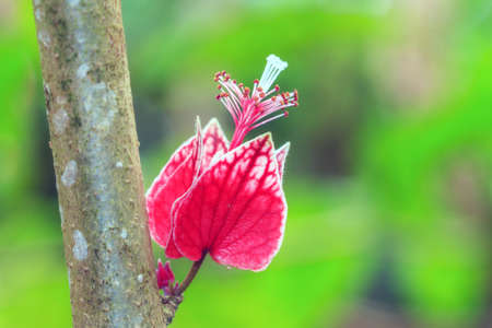 Beautiful close up macro of a small tropical pink flower (possibly hibiscus) growing from the wood of a tree trunk