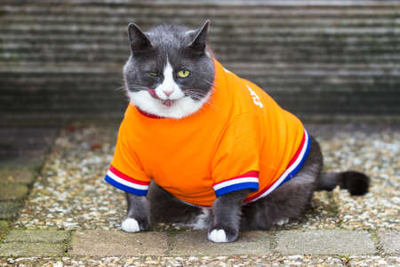 Random image of a fat pussy cat dressed as soccer player for the dutch national team exercising in the garden in spring in the Netherlands Stock Photo - 74699190
