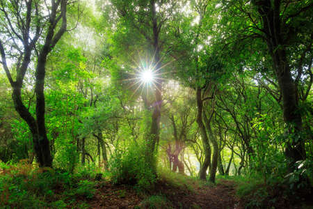 Beautiful green nature view of the Laurissilva forest (Laurel forest) in the mountains of Madeira in summer