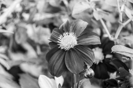 black and white photo of flowers photo