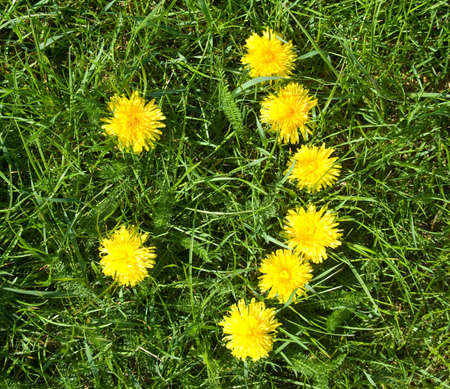 smile symbol made of dandelions over green grass