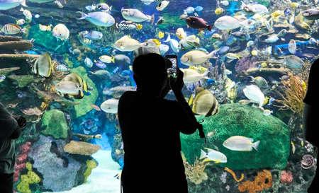 A man taking selfie in Toronto Aquarium. Ripleys Aquarium of Canada is a public aquarium in Toronto, Ontario, Canada.