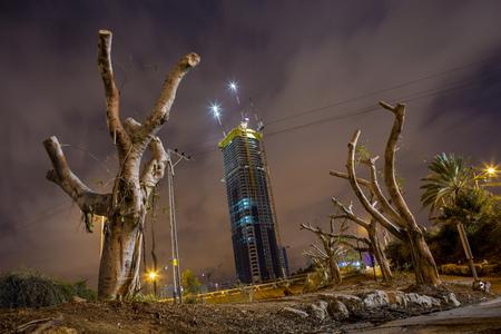 devastation: Dead trees in Tel Aviv. Israel