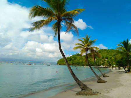Plames on the beach Stok Fotoğraf