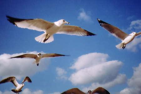 Seagulls Flying Stock Photo - 2209825