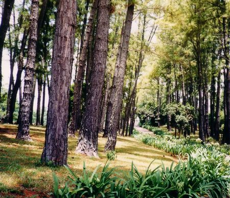 woodsy: Tropical Trees