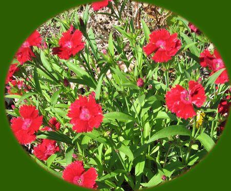 Flower Oval