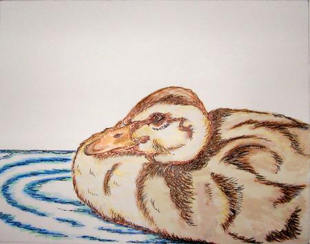 Duck Swimming Stock Vector - 7903082