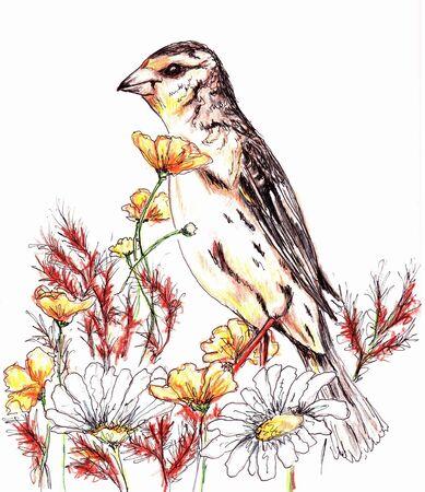 Bird Çizim
