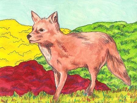 Illustration of a Fox Vector