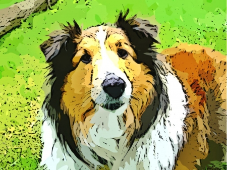 Pet Collie Dog with long fur