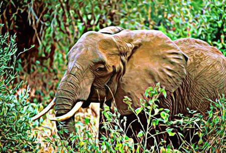 Elephant Иллюстрация
