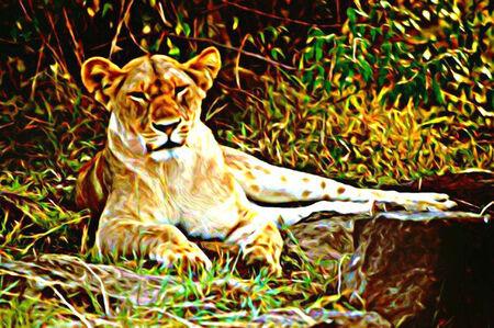tawny: Lion Illustration