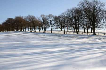 sidelit: shadows in the snow in late winter Stock Photo