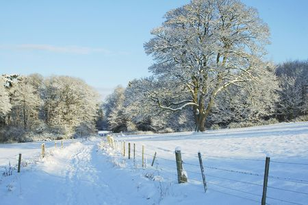 sidelit: country track with trees and meadow deep in snow in the sunshine
