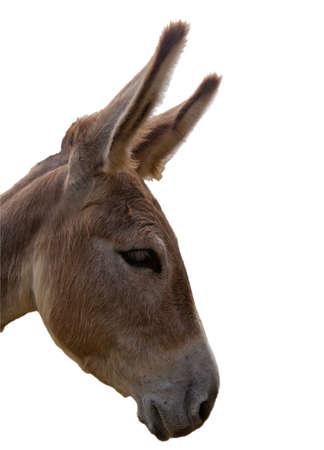 Headshot of a sad donkey isolated on white background Stock Photo