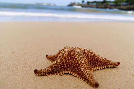 Starfish on the beach near blue sea photo