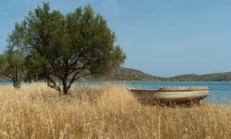 Fishing boat on Mediterranean shore near olive tree. Background. Greece. photo