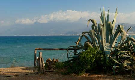 Green agave near sea coast  Crete Greece Stock Photo