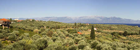 Peloponnese countryside in olive wood near sea