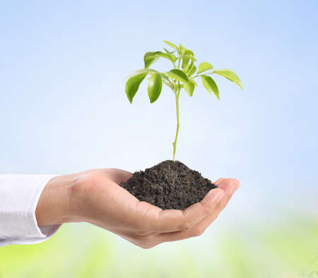 rural development: holding green plant in hand Stock Photo