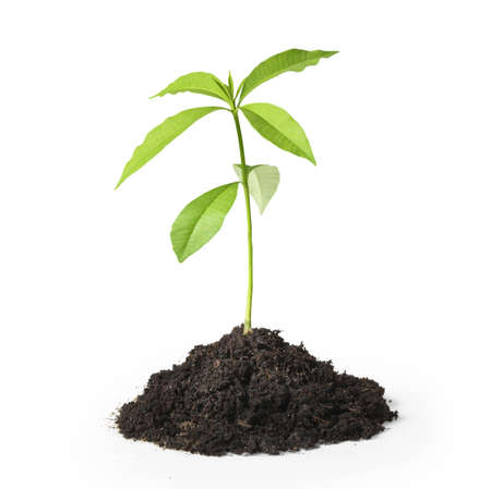 black soil: green plant on a white background isolated on white background