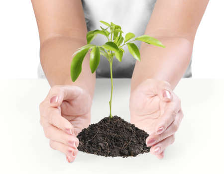 Hands Protect Your and plant isolated on white background photo