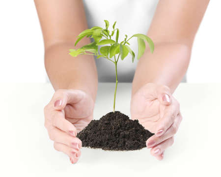 seed growing: holding a plant on a white background