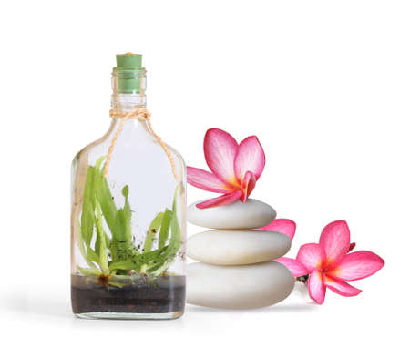traquility: bottle of essential oil and orchid flowers on a white background Stock Photo