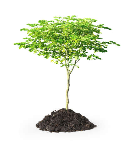 clod: green plant on a white background ,isolated  Stock Photo