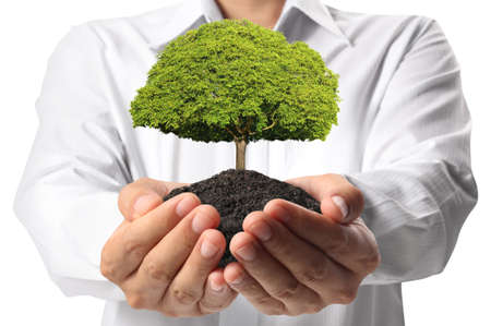 holding green tree in hand  Stock Photo