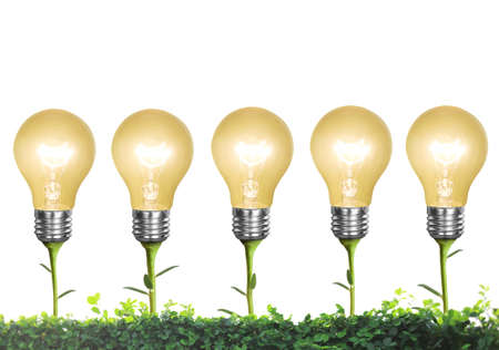incandescent: Incandescent light bulb with plant as the filament