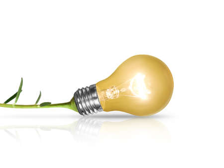 filament: Incandescent light bulb with plant as the filament