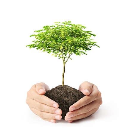 緑の木を手で押し
