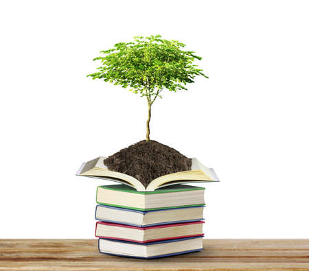 college education: books with tree isolated on white