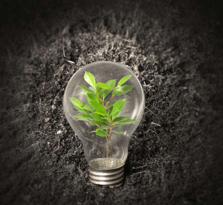 Incandescent light bulb with plant as the filament Stock Photo - 20112065