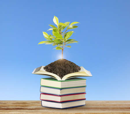 arbre: Open books with a plant Stock Photo