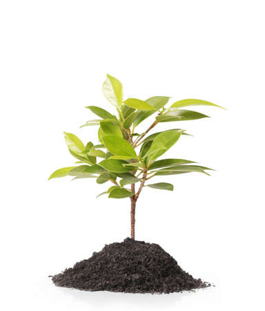 thrive: Young green plant on white background  Stock Photo