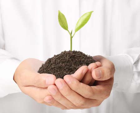H?lt gr?nen Pflanze in der Hand Standard-Bild - 21926409