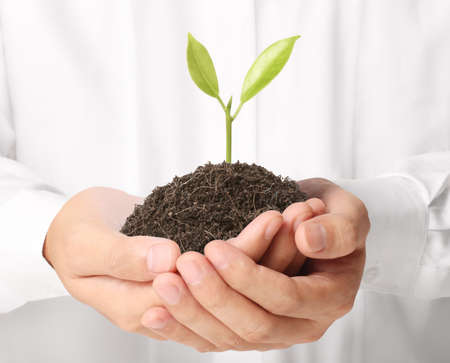 plant seed: holding green plant in hand