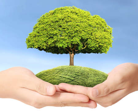 holding green tree in the hand  photo