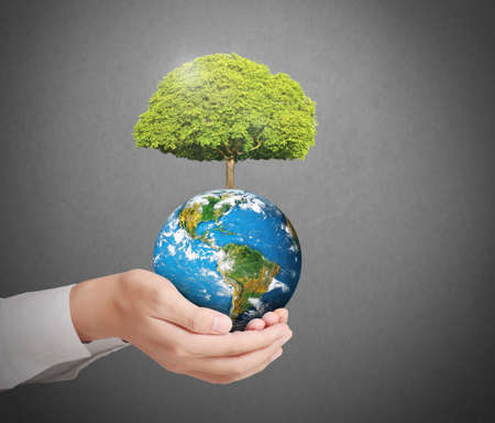 ecology  environment: earth in human the hand