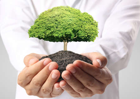 holding green tree in the hand