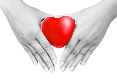 Heart in the hands isolated  photo