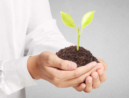 Businessman holding plant sprouting  photo