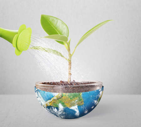 environmental protection:  protect the environment concept earth with  tree
