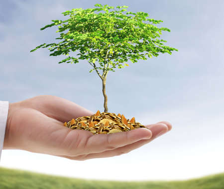 man hand holding a tree growing on coins photo
